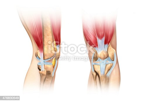 istock Human knee cutaway illustration. Anatomy image. 476830549