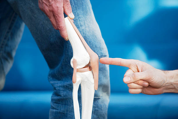 Human knee joint Artificial model of a knee joint. A finger pointing at the patella. XXL size image. cartilage stock pictures, royalty-free photos & images