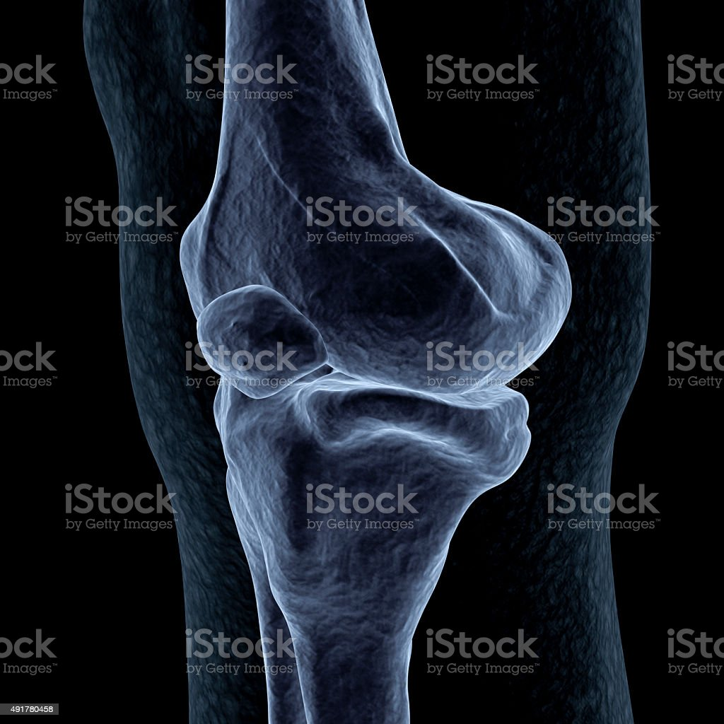 Human Knee x-ray - front perspective stock photo