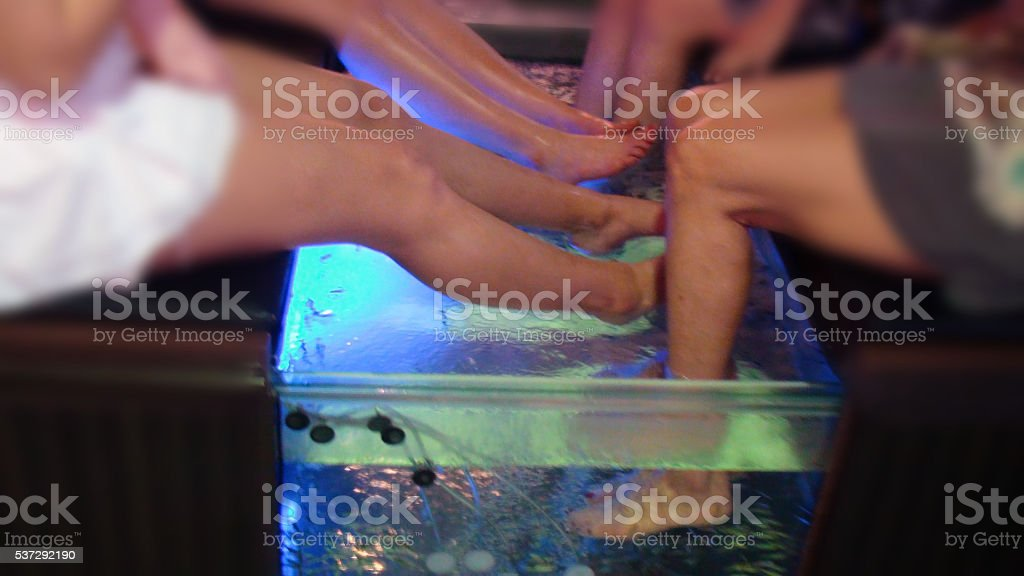 Human Legs Having Fish Spa Skin Care Treatment stock photo