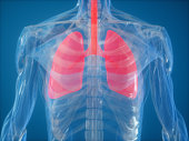 istock Human Lung 1201121654