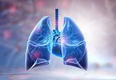 istock Human lungs anatomy 1256628155