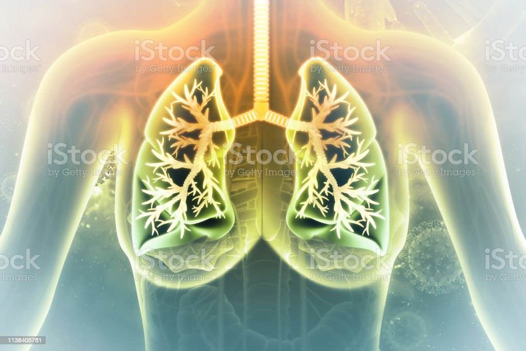 Human lungs on scientific background. 3d illustration stock photo