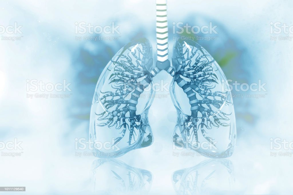 Human lungs on scientific background stock photo