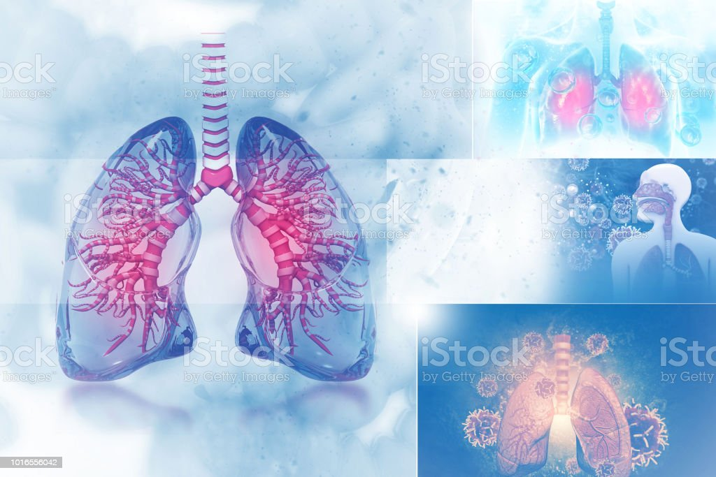 Menschliche Lunge auf wissenschaftlichen Hintergrund – Foto