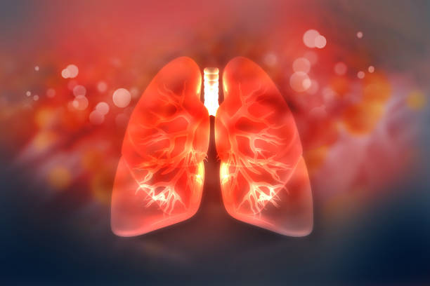 Human lungs on scientific background Human lungs on scientific background lung stock pictures, royalty-free photos & images