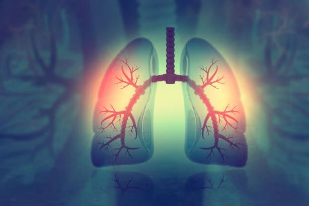 människans lungor på vetenskaplig bakgrund - astmatisk bildbanksfoton och bilder