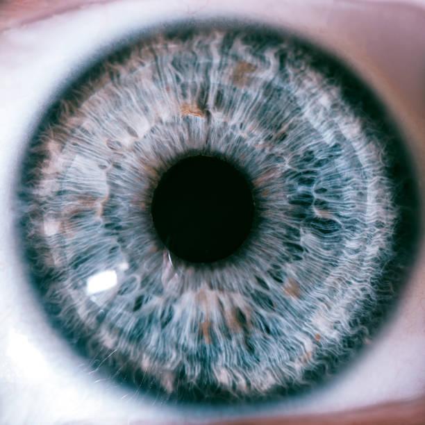 Human Macro Eyes Human macro eyes iris eye stock pictures, royalty-free photos & images