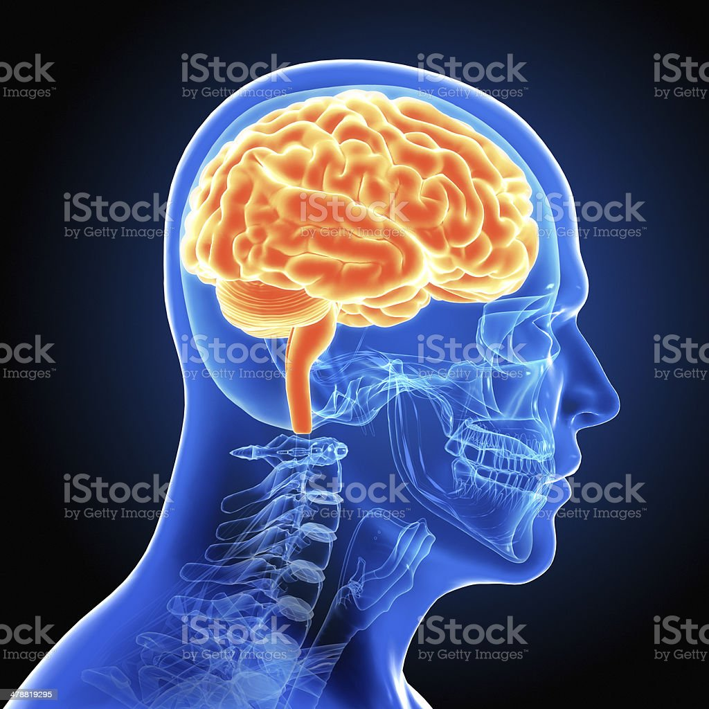 Human Male Brain Scan stock photo