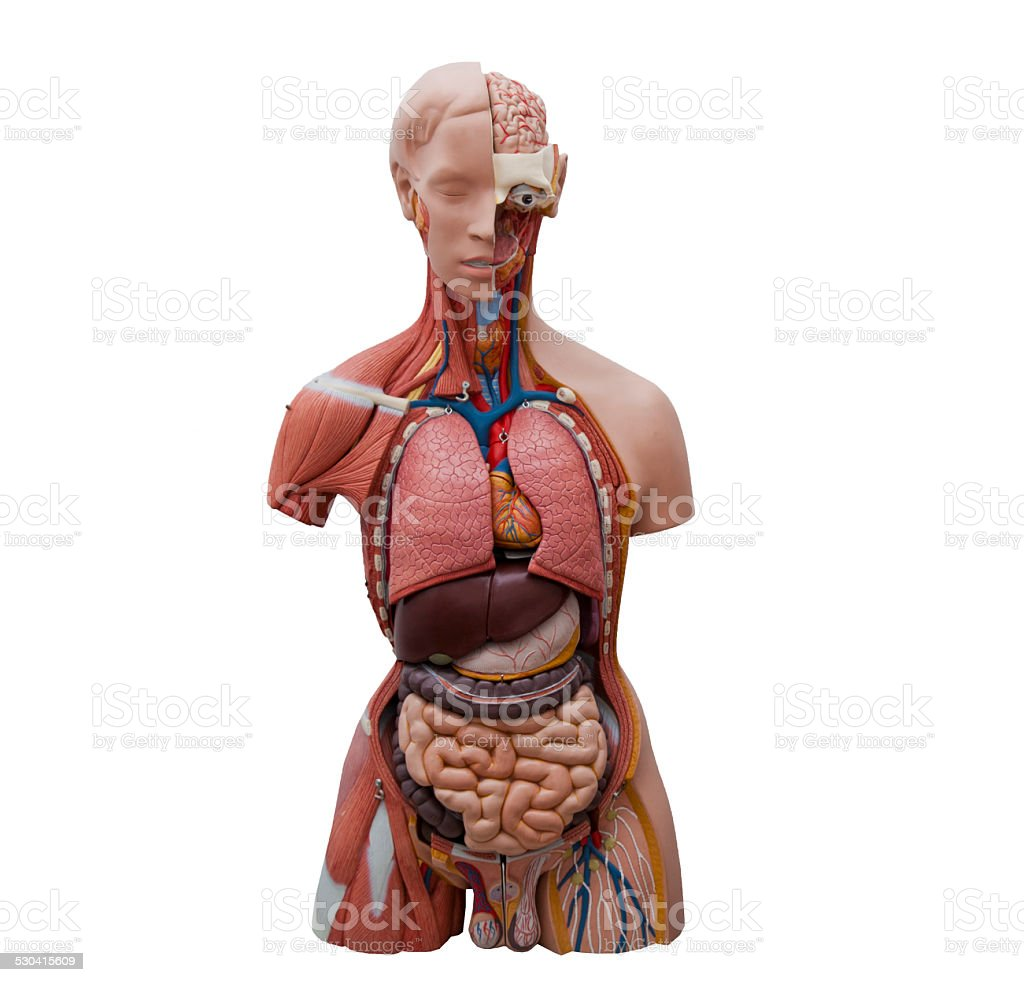 Human model stock photo