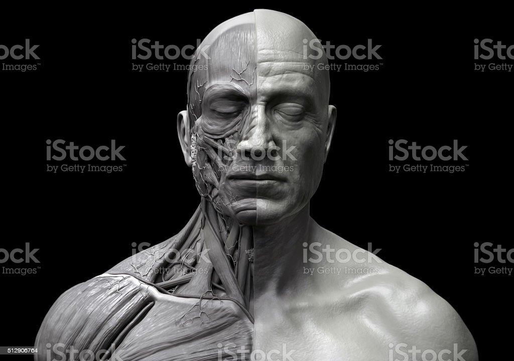 Menschlicher Muskelstruktur In Schwarz Und Weiß Stock-Fotografie und ...
