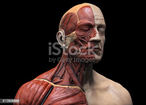 istock Human muscular structure 512906888
