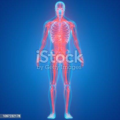 istock Human Nervous System Anatomy 1097232178