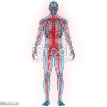 istock Human Nervous System Anatomy 1125832062