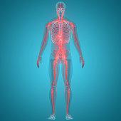 istock Human Nervous System Anatomy 1130313244