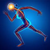 istock Human Nervous System 675473182