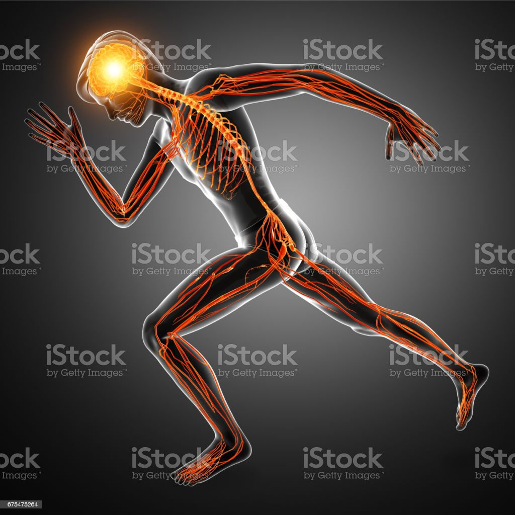 Human Nervous System stock photo