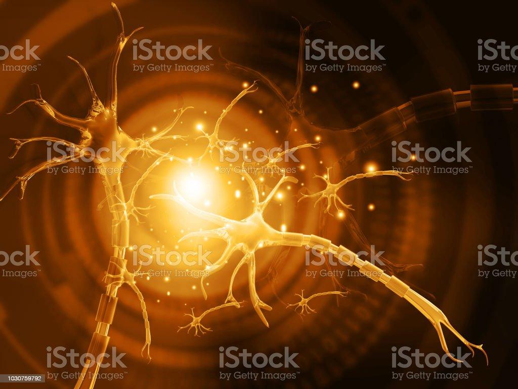 human neuron stock photo