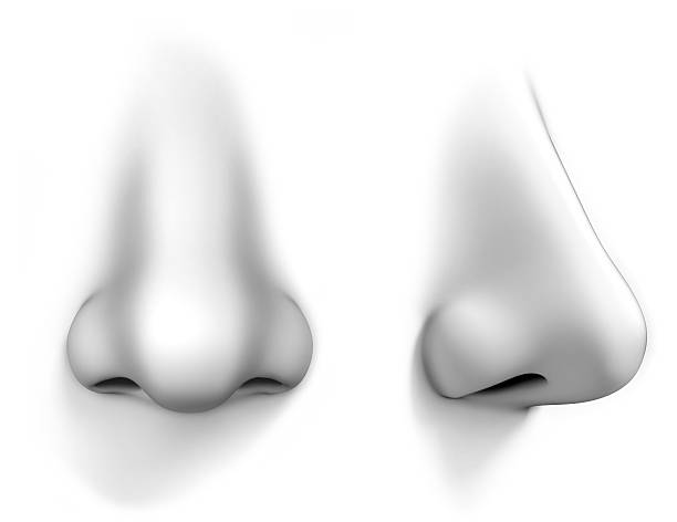 human nose isolated on white stock photo