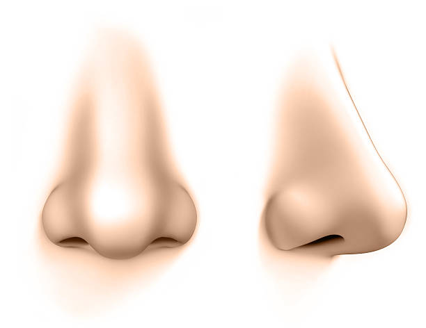 human nose isolated on white human nose isolated on white human nose stock pictures, royalty-free photos & images