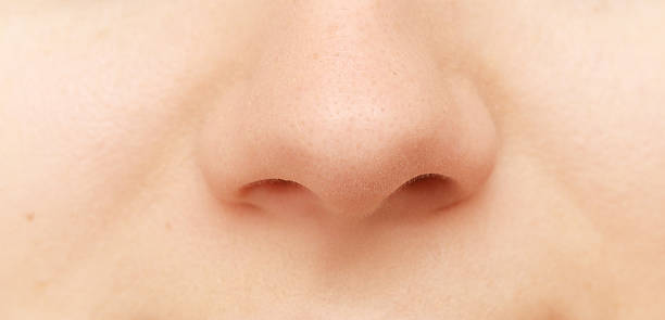 human nose close up of human nose human nose stock pictures, royalty-free photos & images
