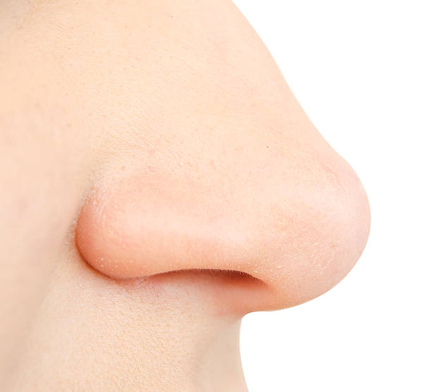 human nose - nose stock photos and pictures