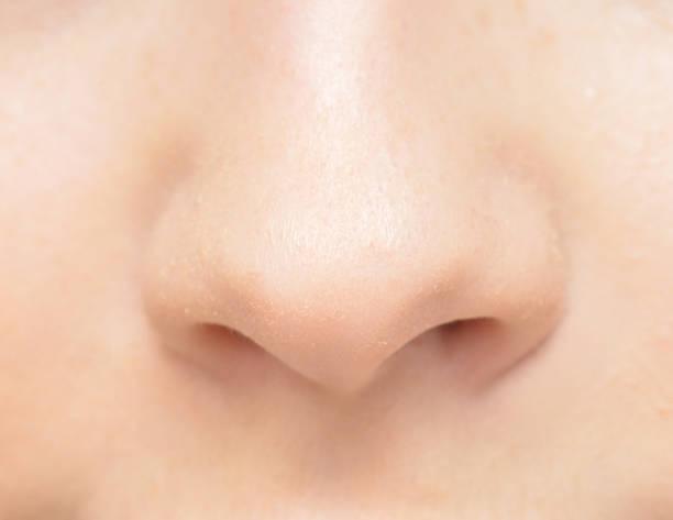 human nose stock photo