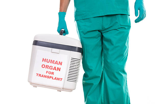 Human Organ Transplantation stock photo