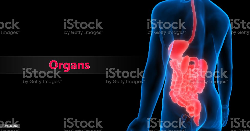 Human Organs Anatomy Stock Photo More Pictures Of Abstract Istock