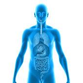 istock Human Organs 497299851