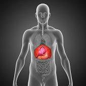 istock Human Organs 497300203