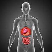 istock Human Organs 497371499