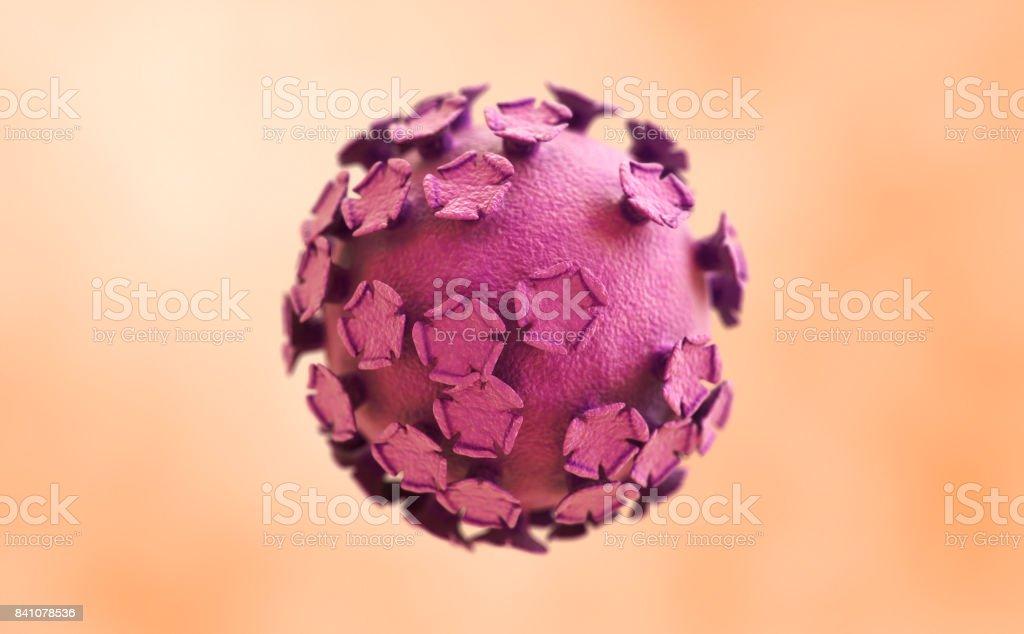 Human papillomavirus (HPV) stock photo