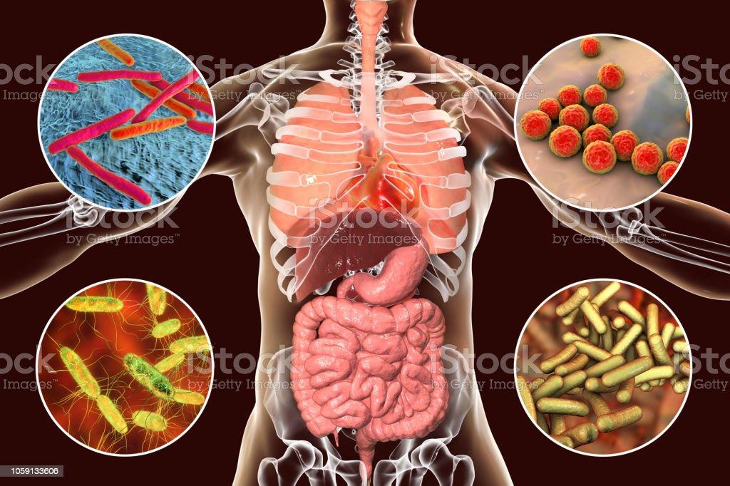 Human pathogenic microbes, respiratory and enteric pathogens stock photo