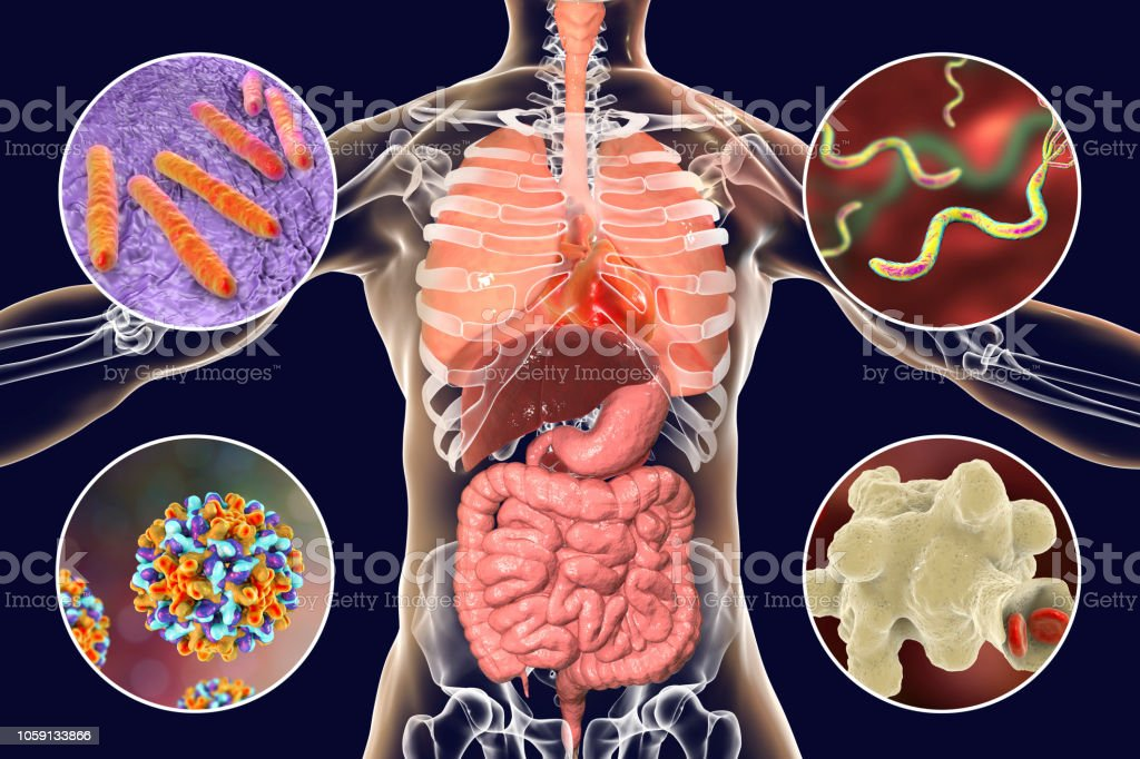 Human pathogenic microbes, respiratory, enteric and liver pathogens stock photo