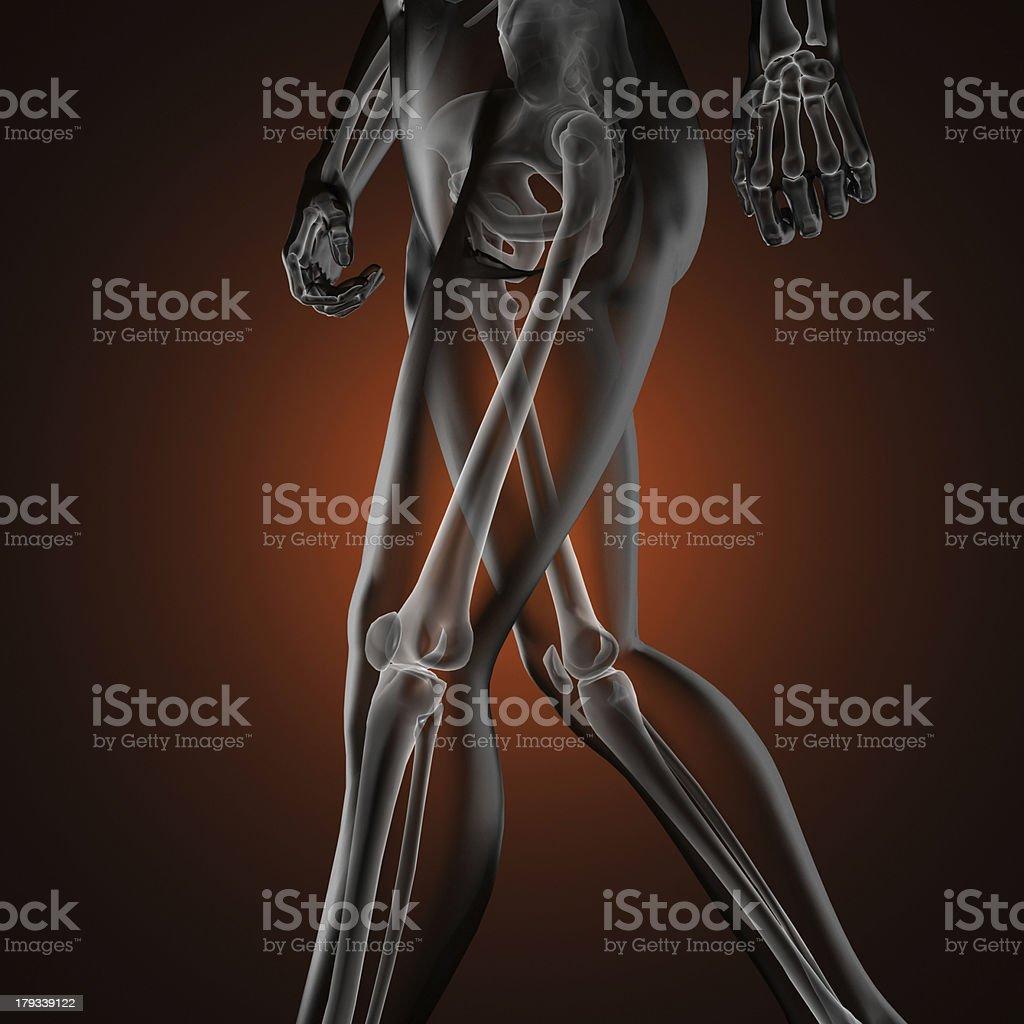human radiography scan royalty-free stock photo