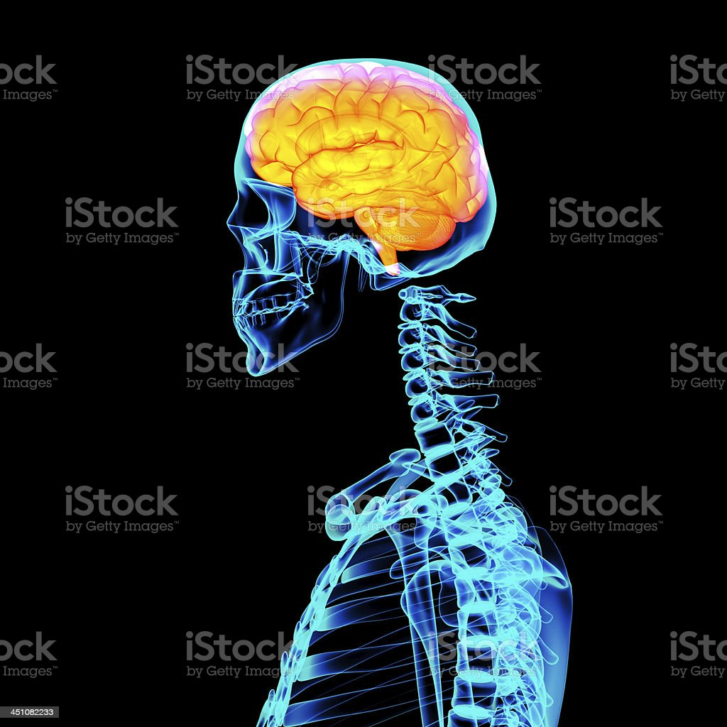 Human Red Brain X Ray Side View Stock Photo & More Pictures of ...