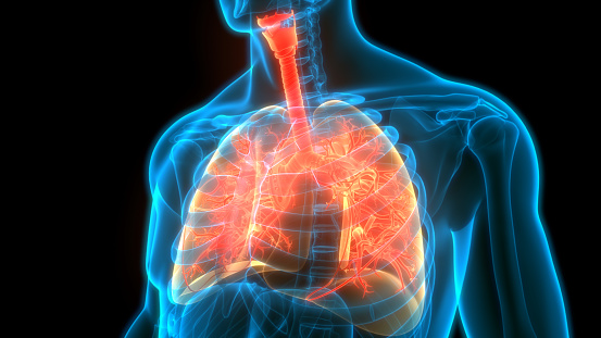 istock Human Respiratory System Lungs Anatomy 1222132825