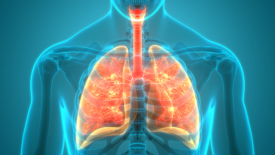 istock Human Respiratory System Lungs Anatomy 1251244145