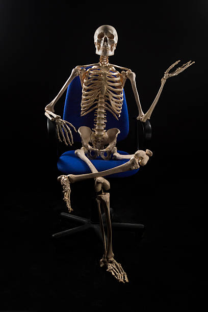127 Human Skeleton Chair Human Bone Sitting Stock Photos Pictures Royalty Free Images Istock