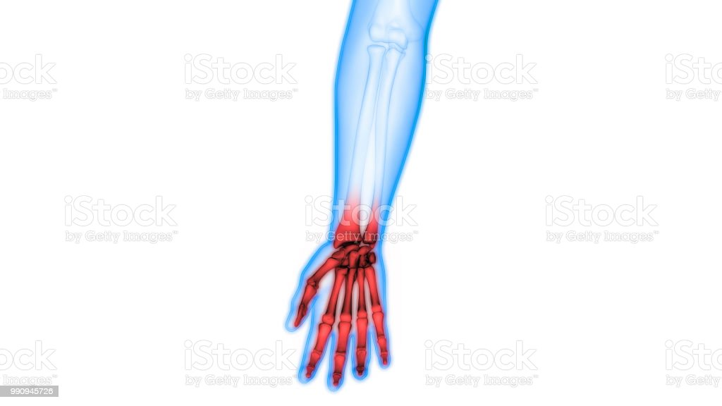 Human Skeleton Bone Joints Pain Anatomy Stock Photo More Pictures