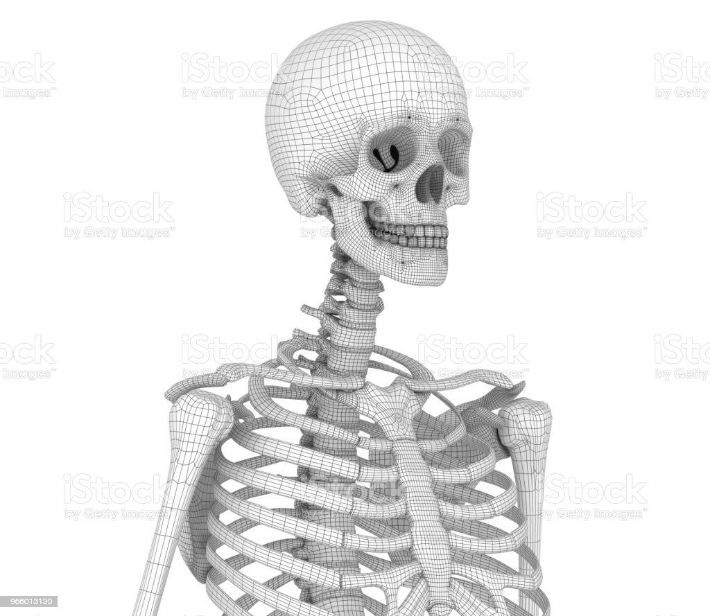 Berühmt Komodowaran Skelett Fotos - Physiologie Von Menschlichen ...