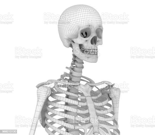 Människans Skelett Bröst Bröstet Medicinskt Korrekt 3d Illustration-foton och fler bilder på Anatomi