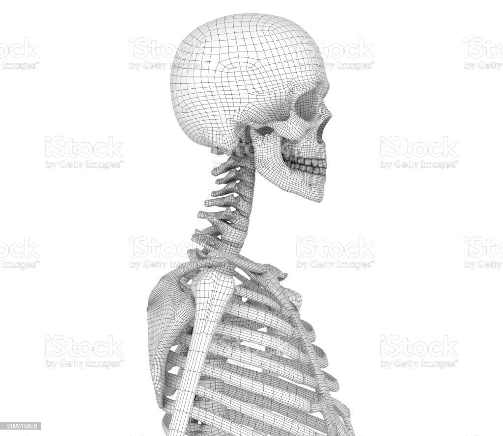 Menselijk skelet: borst borst.  Medisch nauwkeurige 3D illustratie - Royalty-free Afbeelding Stockfoto