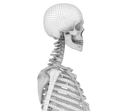Menselijk Skelet Borst Borst Medisch Nauwkeurige 3d Illustratie Stockfoto en meer beelden van Afbeelding
