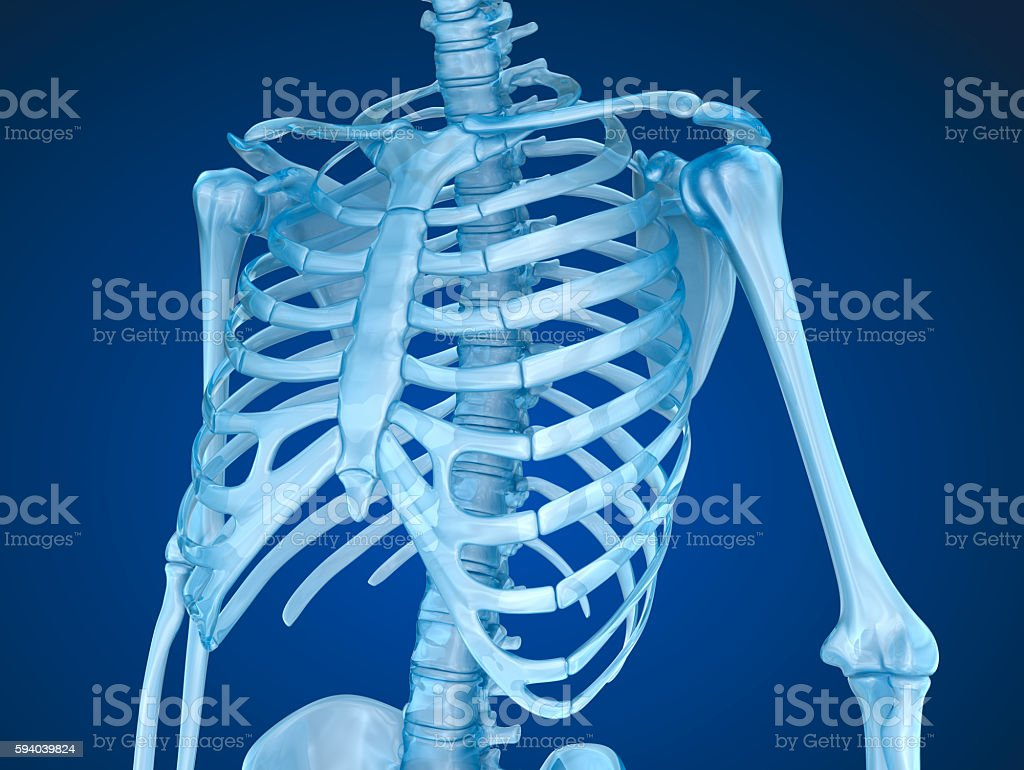 Human Skeleton Breast Chest Stock Photo More Pictures Of Anatomy