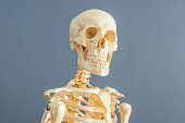 Human skeleton copy space