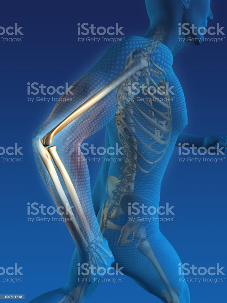 Human skeleton in body while running  royalty-free stock photo