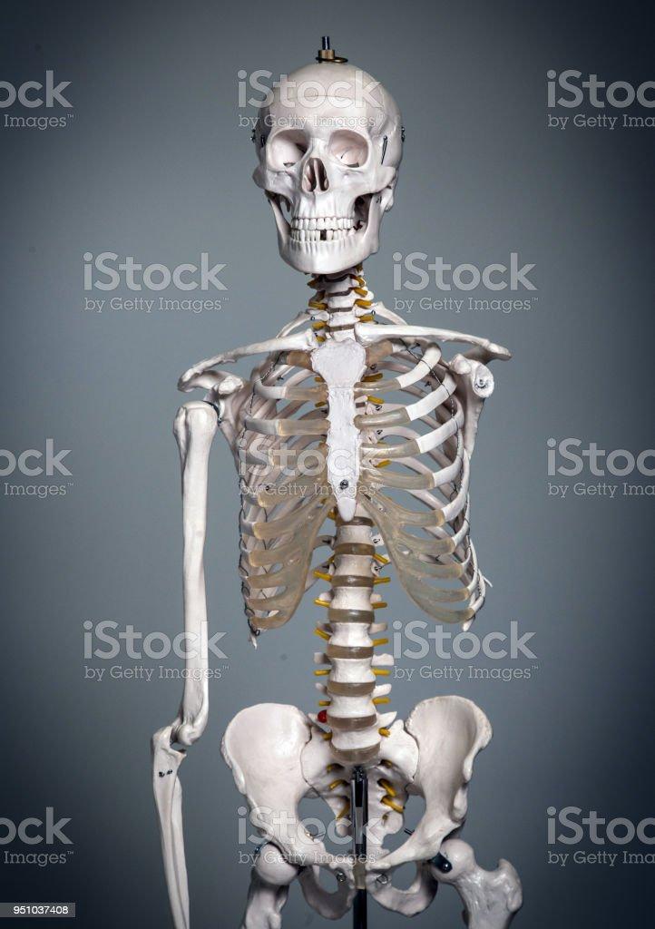 Fotografía de Isolateed Esqueleto Humano En Gris y más banco de ...
