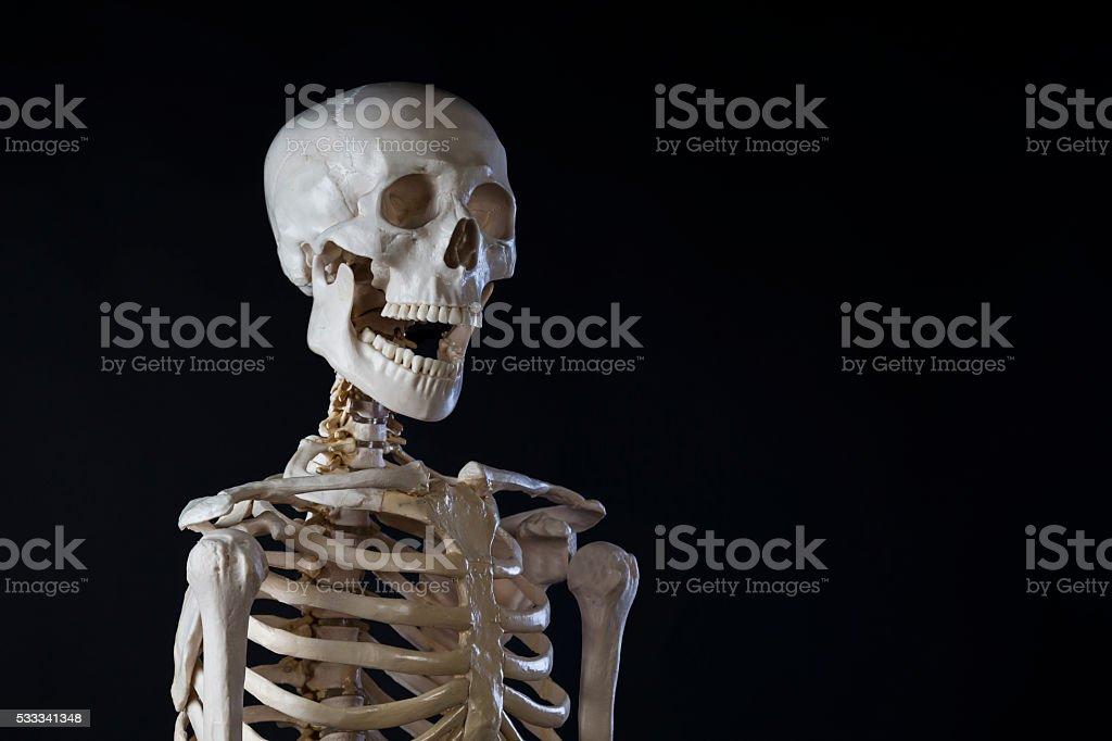 Скелет человека, открыл рот, копия пространство - Стоковые фото Взрослый роялти-фри
